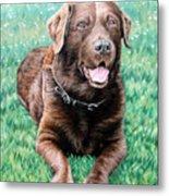 Choco Labrador Metal Print