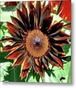 Chocolate Sunflower Metal Print