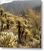 Cholla Cactus And Ocotillo Plants Metal Print