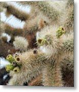 Cholla Cactus Garden Closeup Metal Print