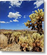 Cholla Cactus Garden In Joshua Tree National Park Metal Print
