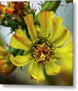 Cholla Flower H1848 Metal Print
