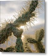 Cholla, Organ Pipe National Monument, Az  January 2015 Metal Print