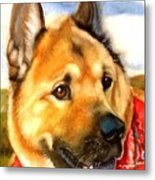 Chow Shepherd Mix Metal Print