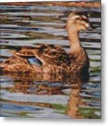 Christchurch New Zealand Grey Duck Metal Print