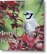 Christmas And Blue Jay Metal Print