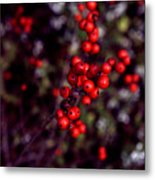 Christmas Berries Metal Print