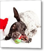 Christmas Dog Chewing On Tennis Ball Metal Print