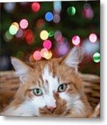 Christmas Kitty In A Basket Metal Print