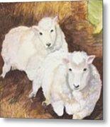 Christmas Sheep Metal Print