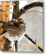 Christmas Sparrow - Christmas Card Metal Print