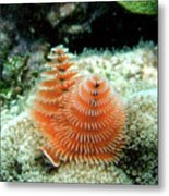 Christmas Tree Worm Metal Print