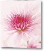 Chrysanthemum #004 Metal Print