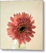 Chrysanthemum #029 Metal Print