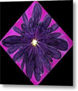 Chrysanthemum 2 Metal Print