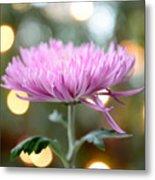 Chrysanthemum Happiness Metal Print