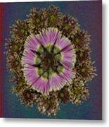 Chrysanthemum Mandala Metal Print