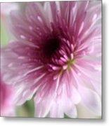Chrysanthemum #001 Metal Print