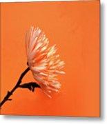 Chrysanthemum Orange Metal Print