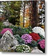 Chrysanthemums In The Garden Metal Print