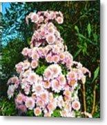 Chrysanths Metal Print