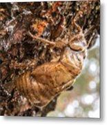 Cicada Exoskeleton Side Metal Print