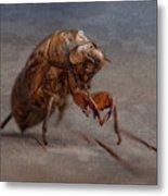 Cicada Shell Metal Print