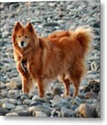 Cindy On The Rocks Metal Print