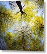 Circle Of Trees Metal Print