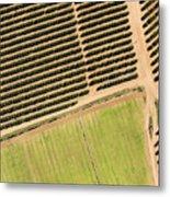 Citrus Farms In Moroccos Productive Metal Print