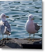 City Gulls Metal Print