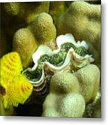 Clam on the Reef Metal Print
