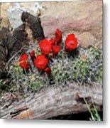 Claret Cup Cactus And Sandstone Metal Print