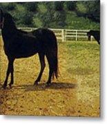 Classic Morgan Horses Metal Print