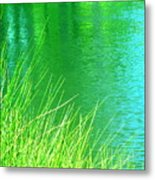 Clear Sighted Metal Print