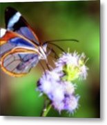 Clear Wings Metal Print