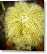 Clematis Flower Head In Fall Metal Print