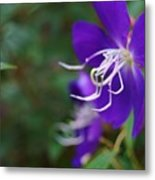 Clematis On The Side Metal Print
