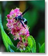 Clethra And Wasp Metal Print