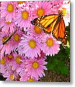 Cliff House Butterflies Metal Print