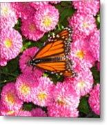 Cliff House Butterflies Ll Metal Print