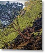 Climbing Tree Roots Metal Print
