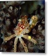 Clinging Crab On Sea Rod Metal Print