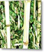 Close Up Big Fresh Bamboo Metal Print