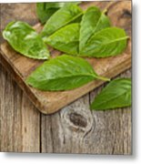 Close Up Fresh Basil Leafs On Rustic Serving Board  Metal Print