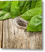 Close Up Fresh Basil Leafs On Rustic Wooden Boards Metal Print