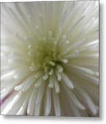 Close-up Of A Flower Metal Print
