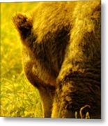 Close Up Of A Grizzily Metal Print