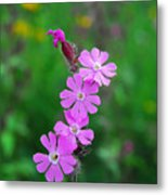 Close Up Of A Least Primrose Flower Metal Print