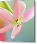 Close Up Of A Pink Flower Metal Print